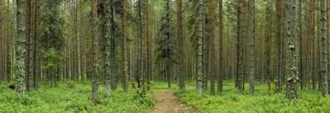 Concurso Cluster madera